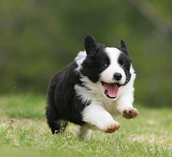 Recall puppy
