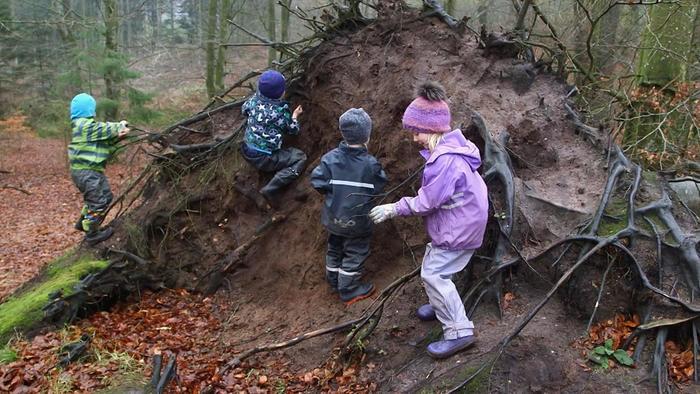 forest_kindergarten_7.jpg