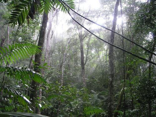 El Peten Jungle.jpg