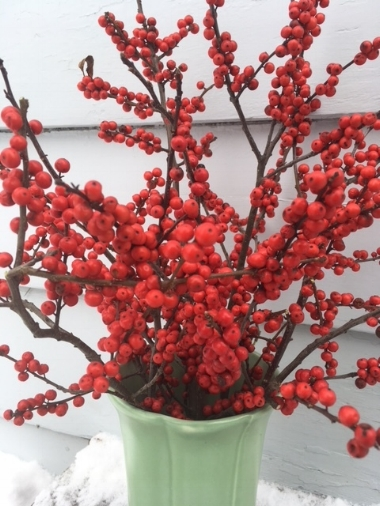 Winterberry red-berried holly