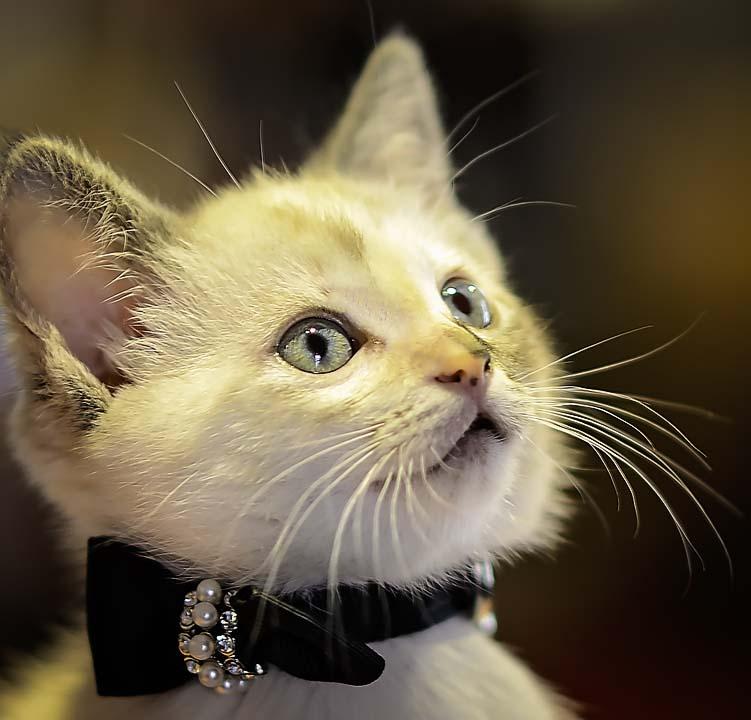 Tampa Cat Photographer