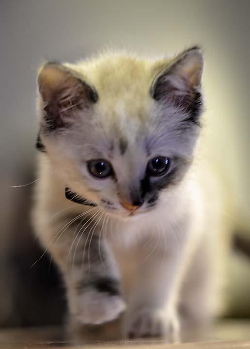 Tampa-Cat-Photography02.jpg