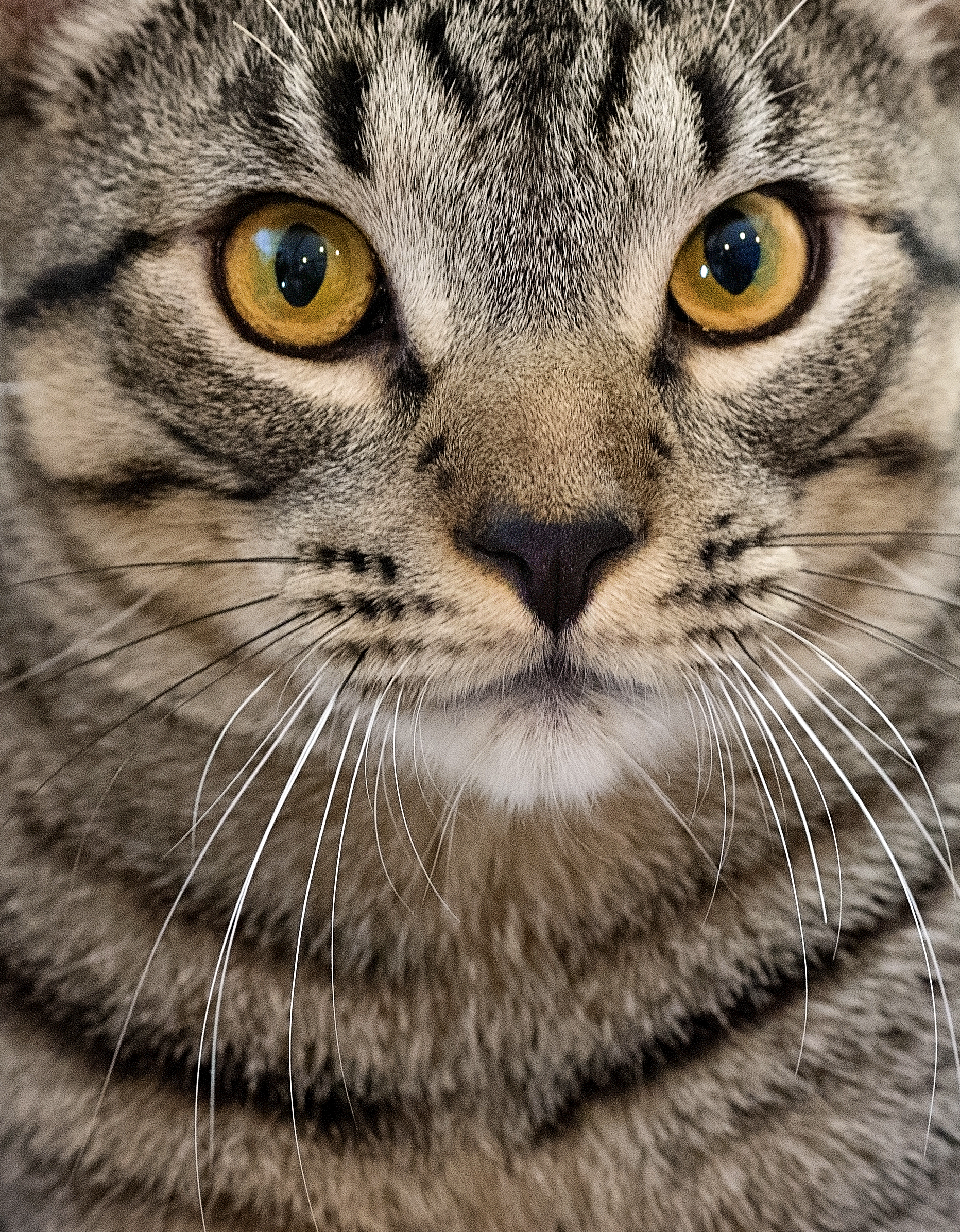 Mcdade Cat.jpg