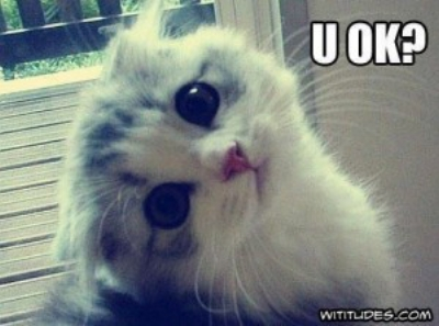 are-you-okay-cat-300x223.jpg