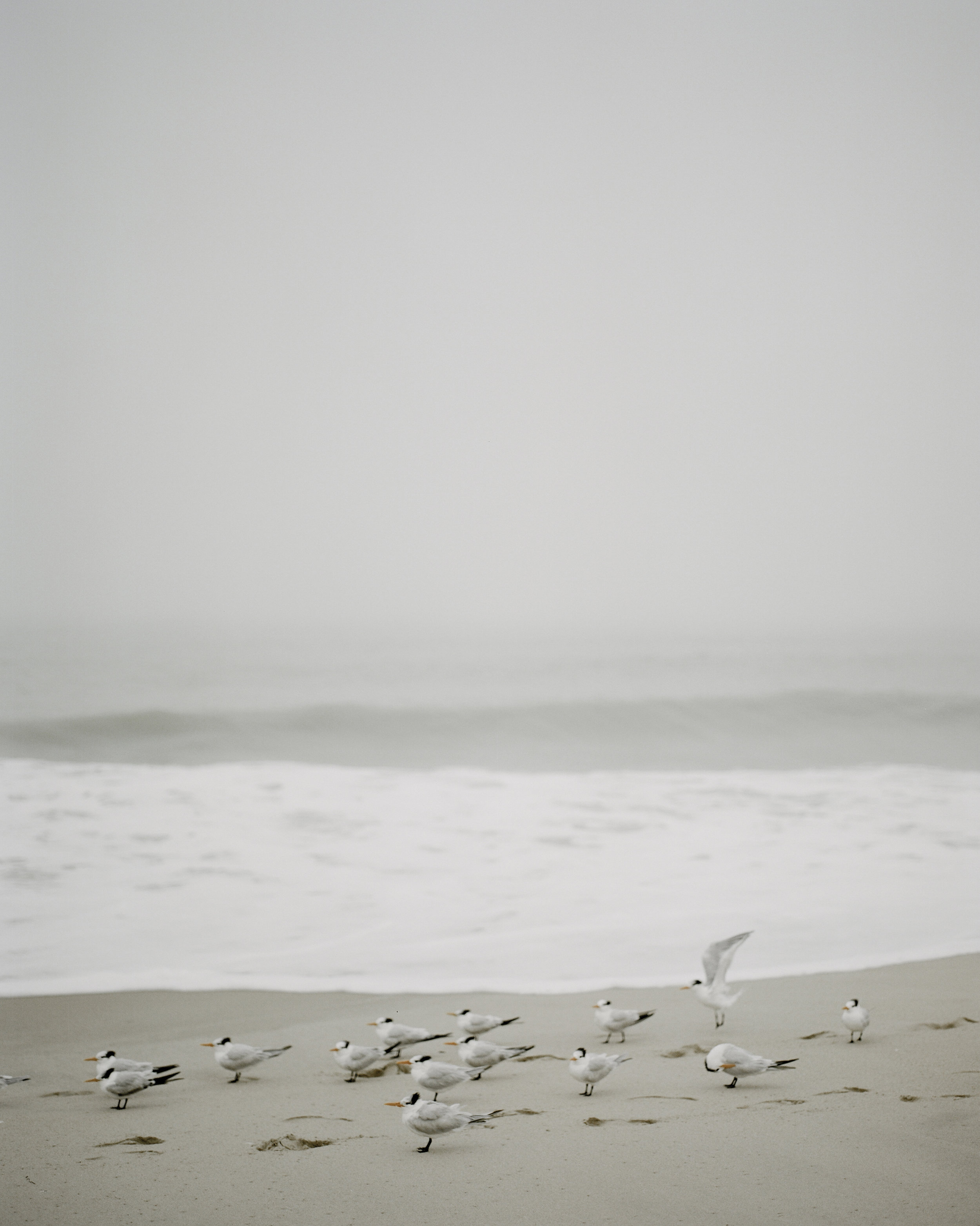 Sand and Surf-10.jpg