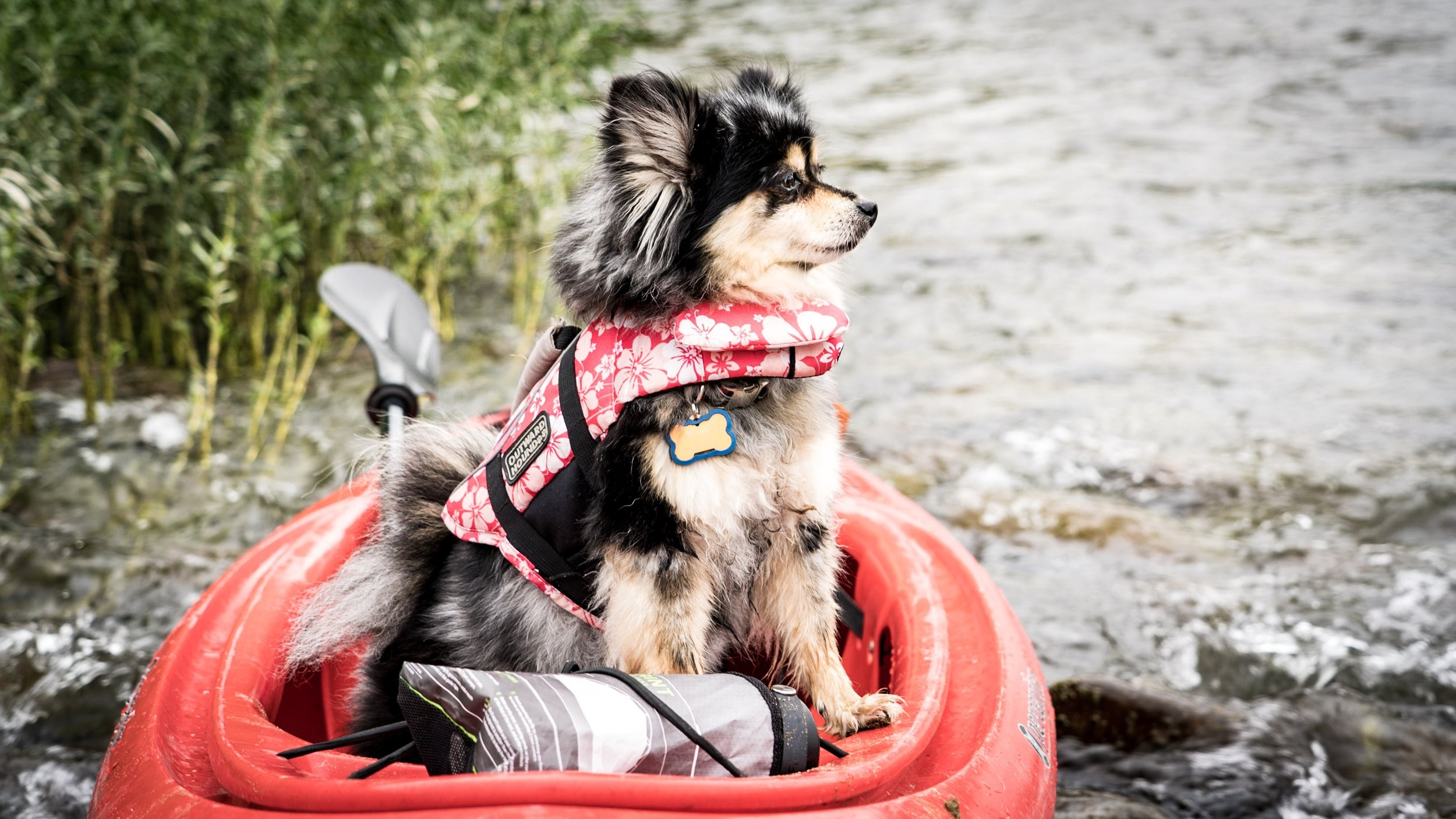 Tinni in her kayak on the Potomac River around mile marker 63 on the C&O Canal
