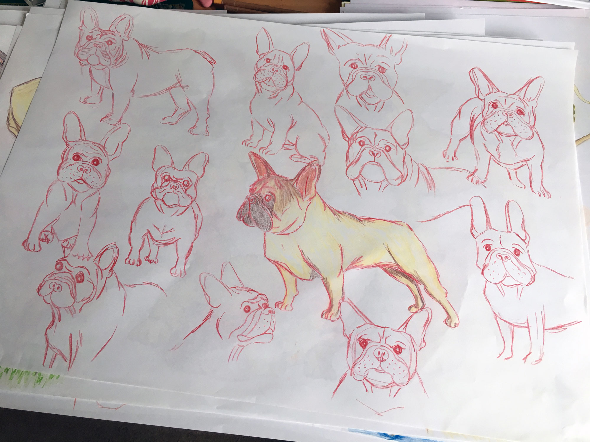 First French Bulldog scribbles