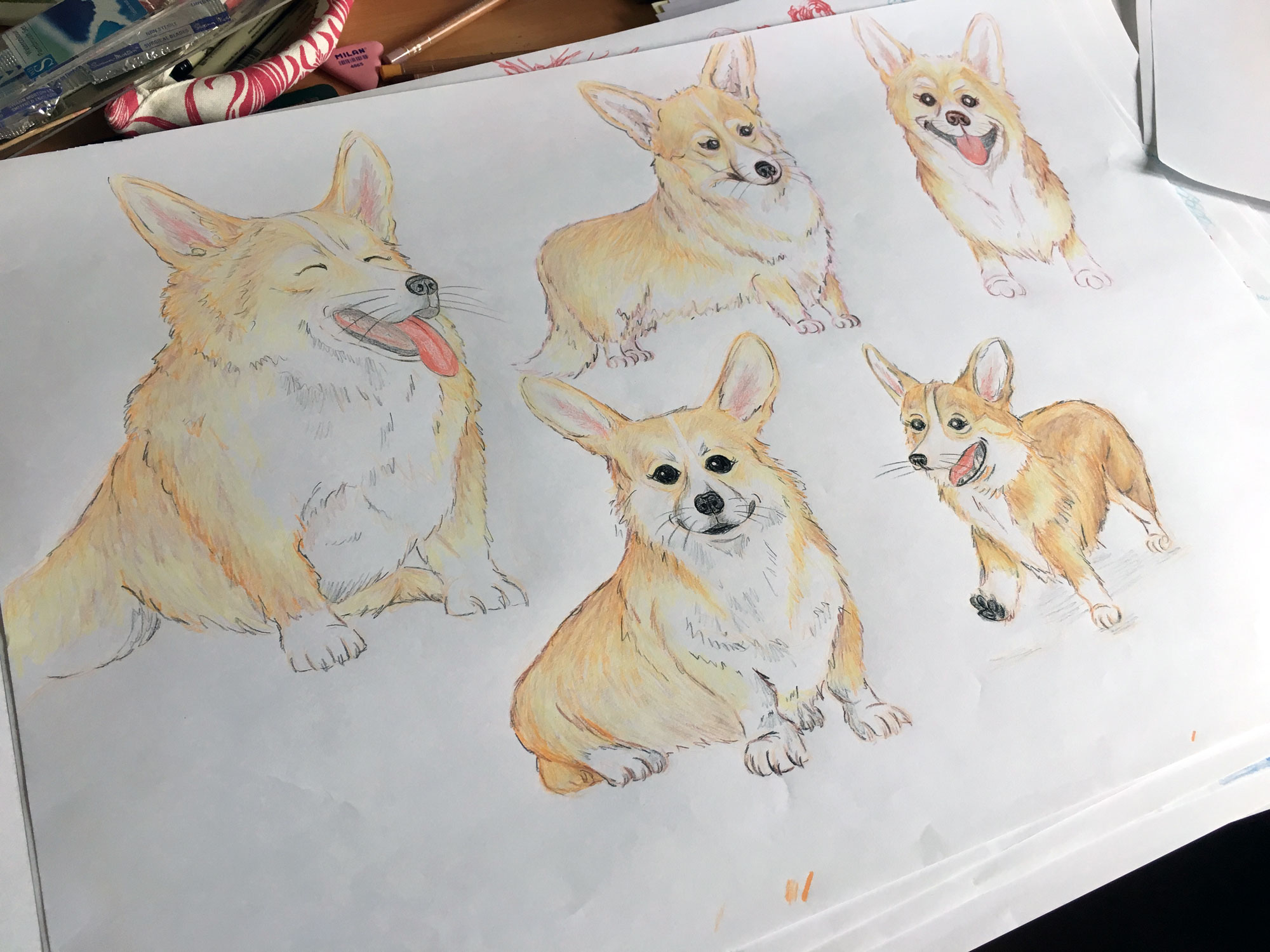 CorgiSketches-2.jpg