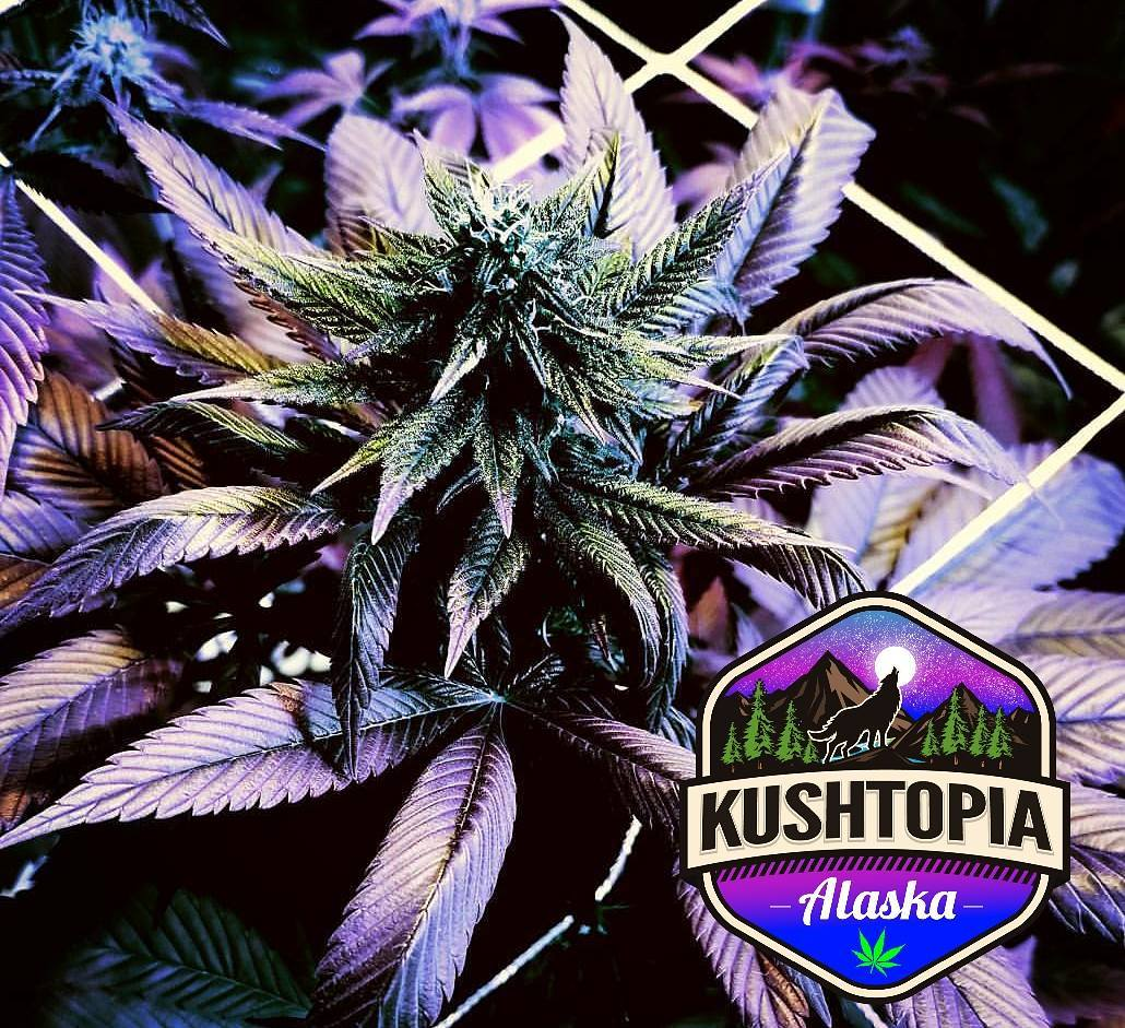 Learn How to Grow - Please Follow Us On YouTube for Future Grow Videos
