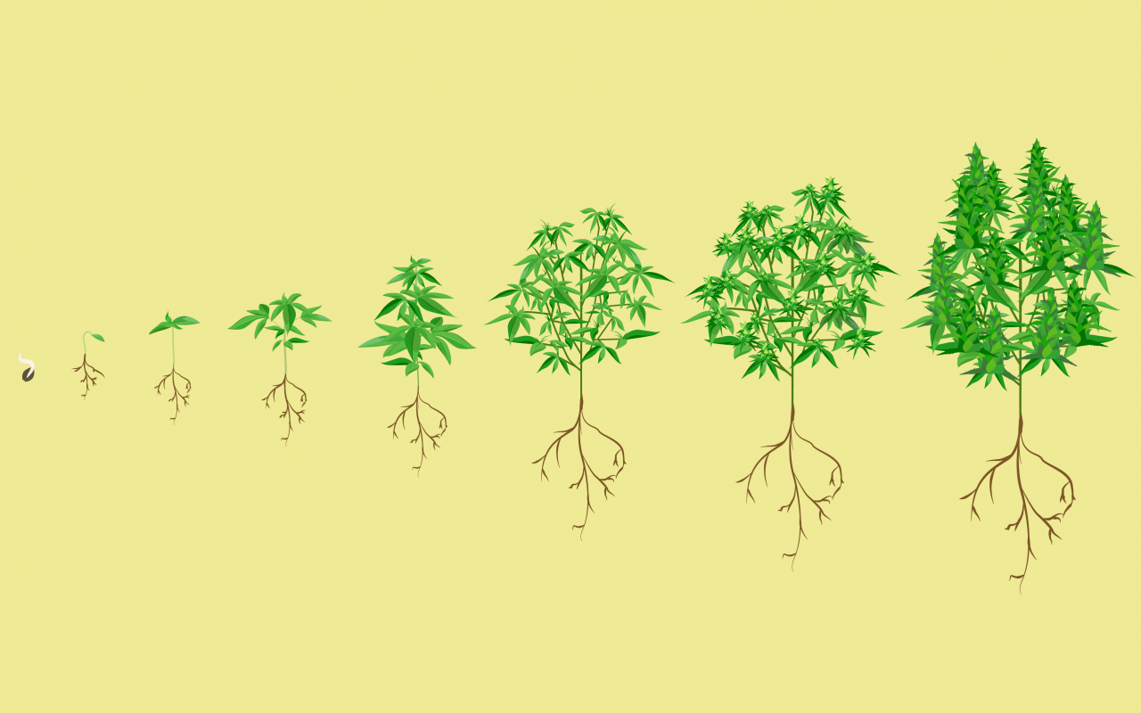 Stages-of-growth-header-1280x800.png