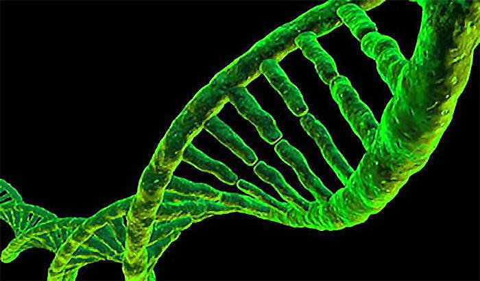 CannabisGenetics.jpg