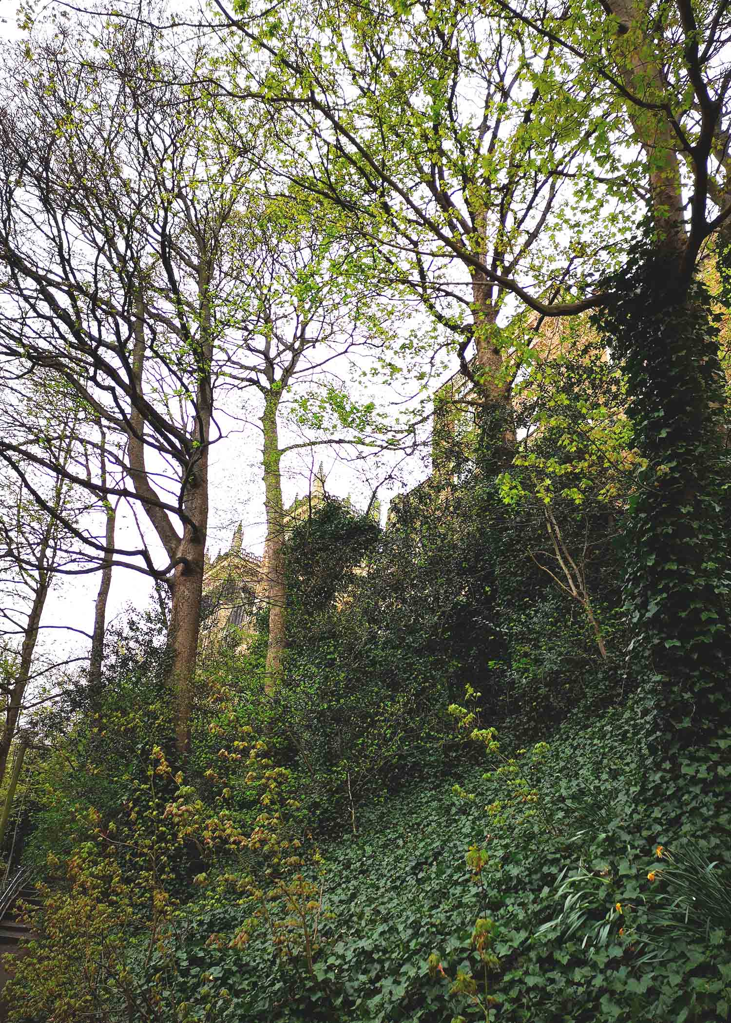 foliage and cathedral top.jpg