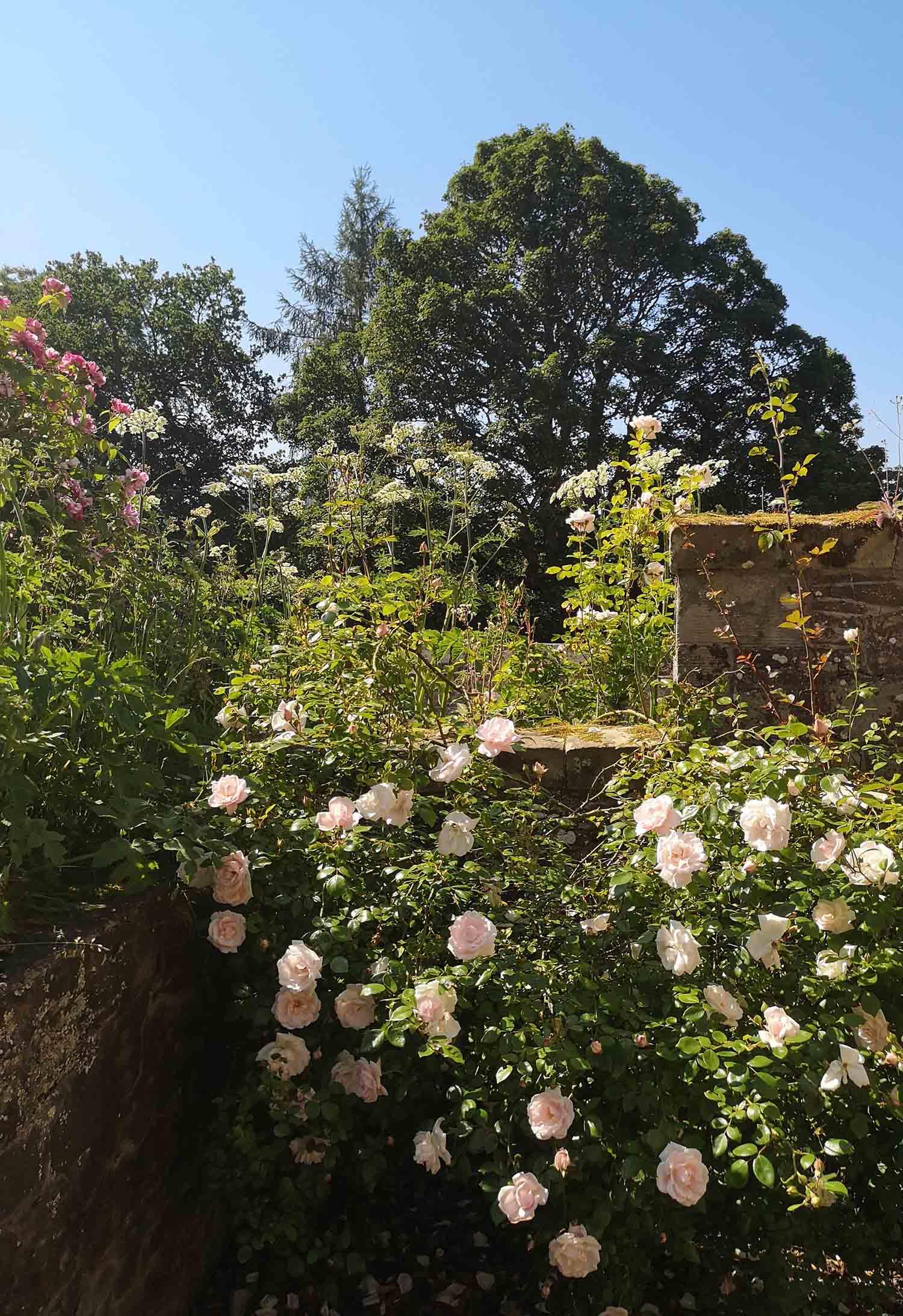 Abbotsford gardens 4.jpg