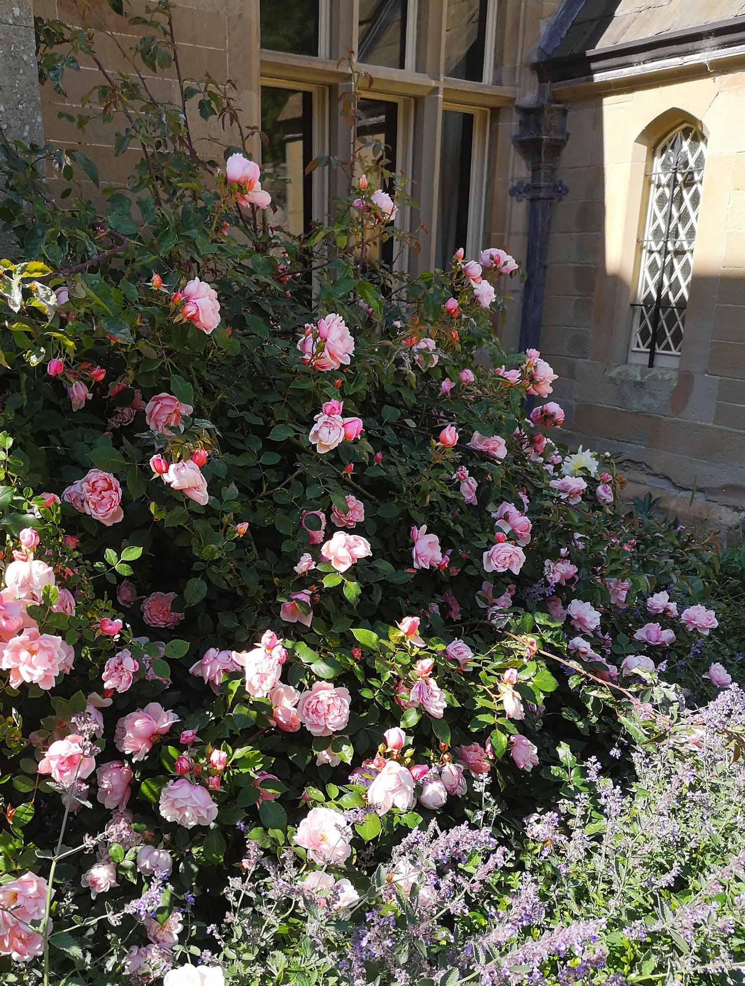 Abbotsford gardens 5.jpg