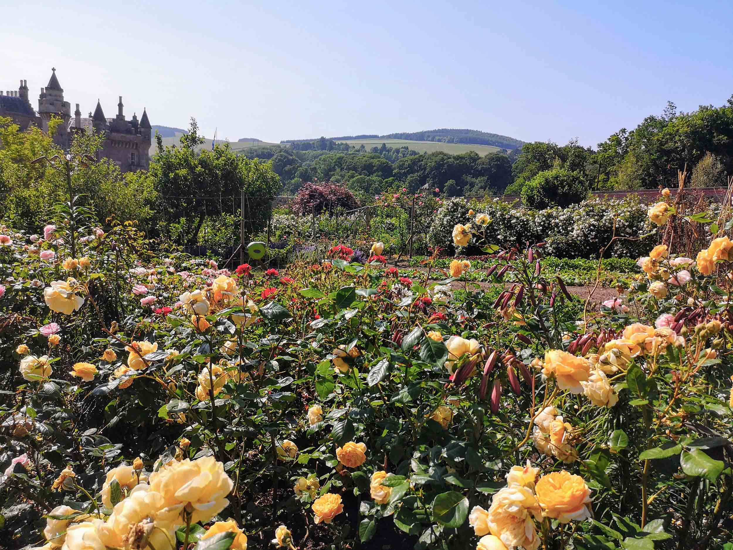 Abbotsford rose gardens and house.jpg