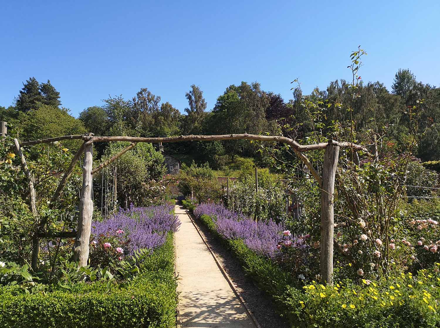 Avenues of rose and lavender
