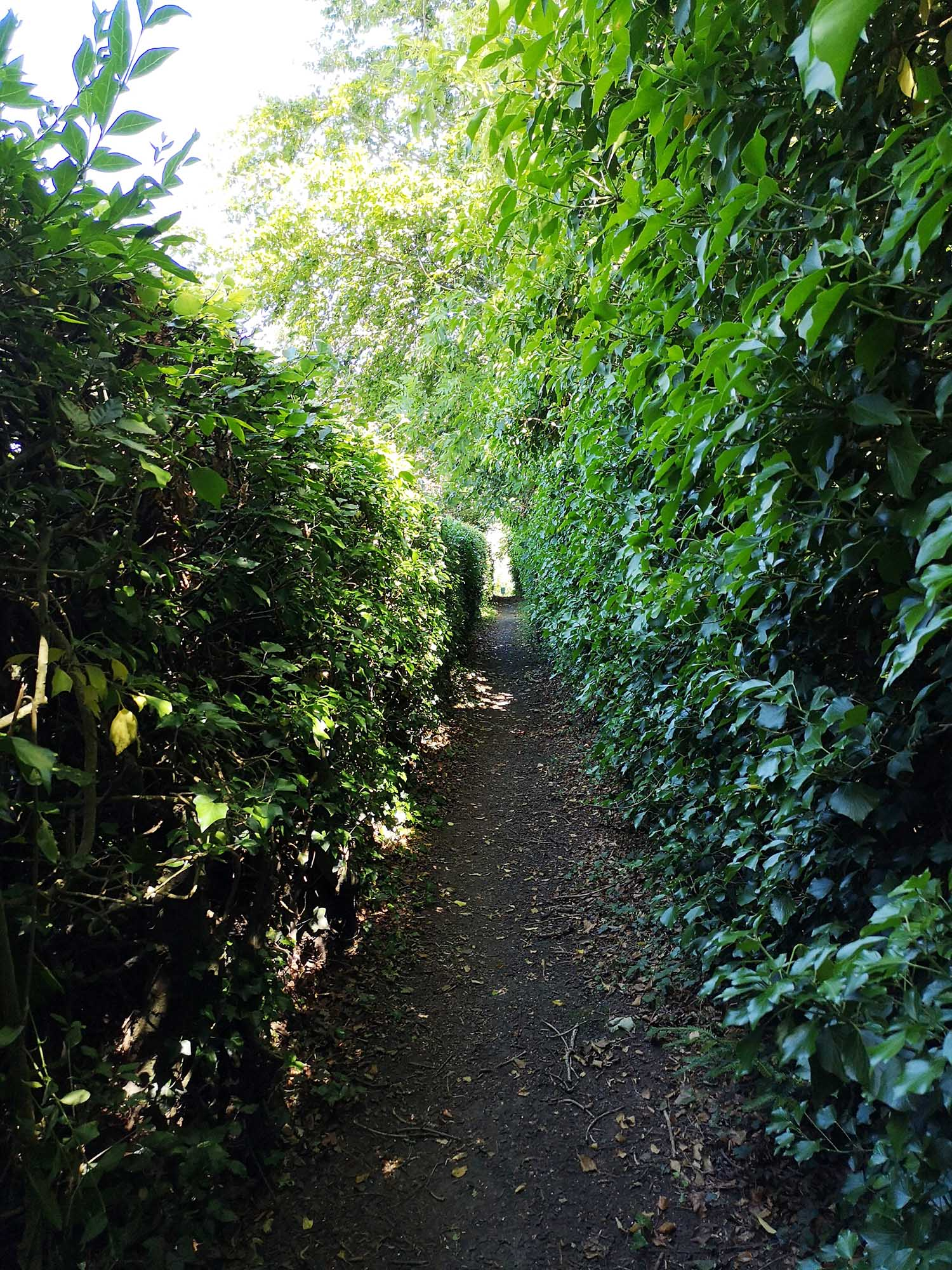 St Boswell's path with trees.jpg