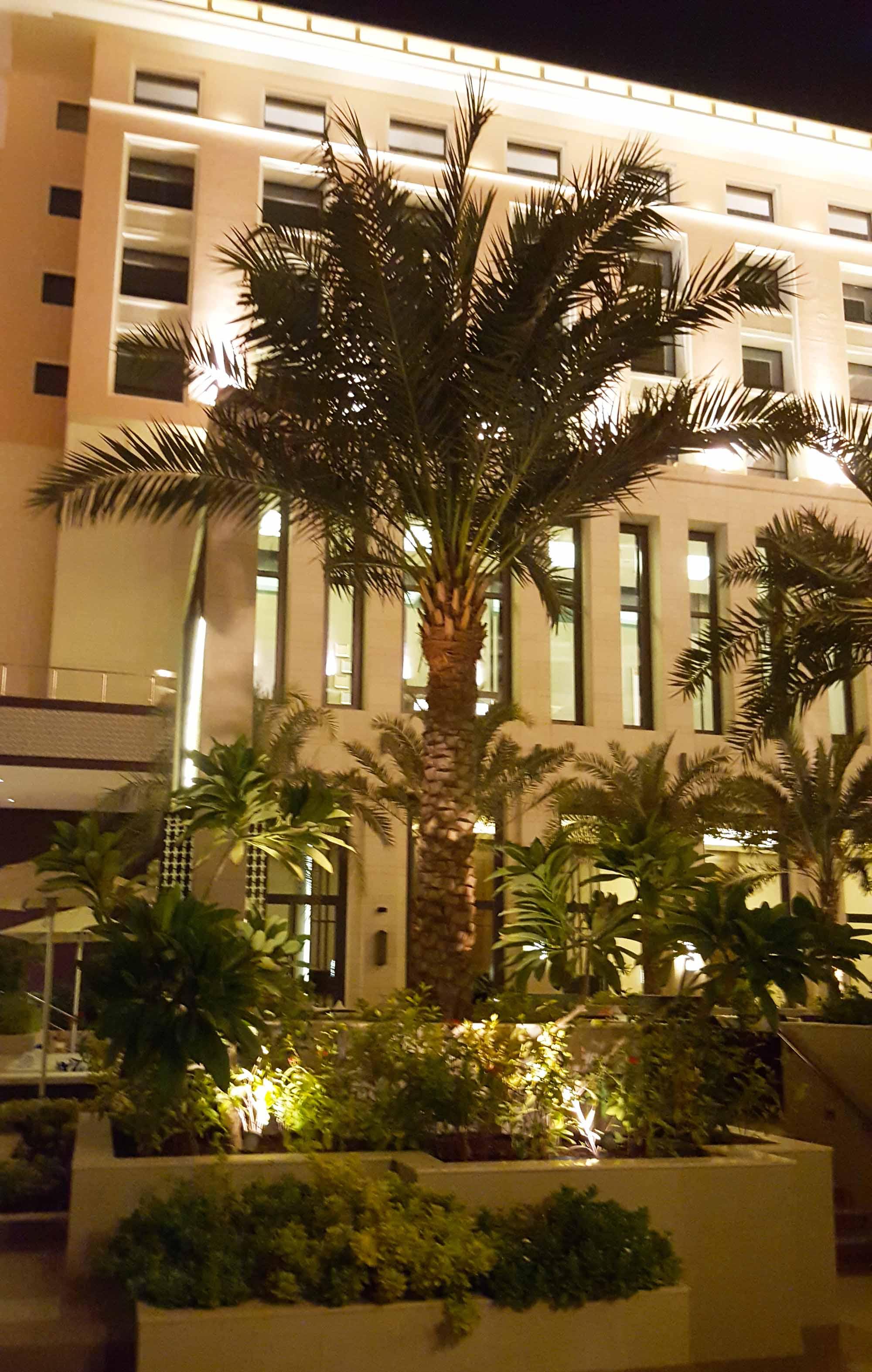 Hormuz Grand palm.jpg