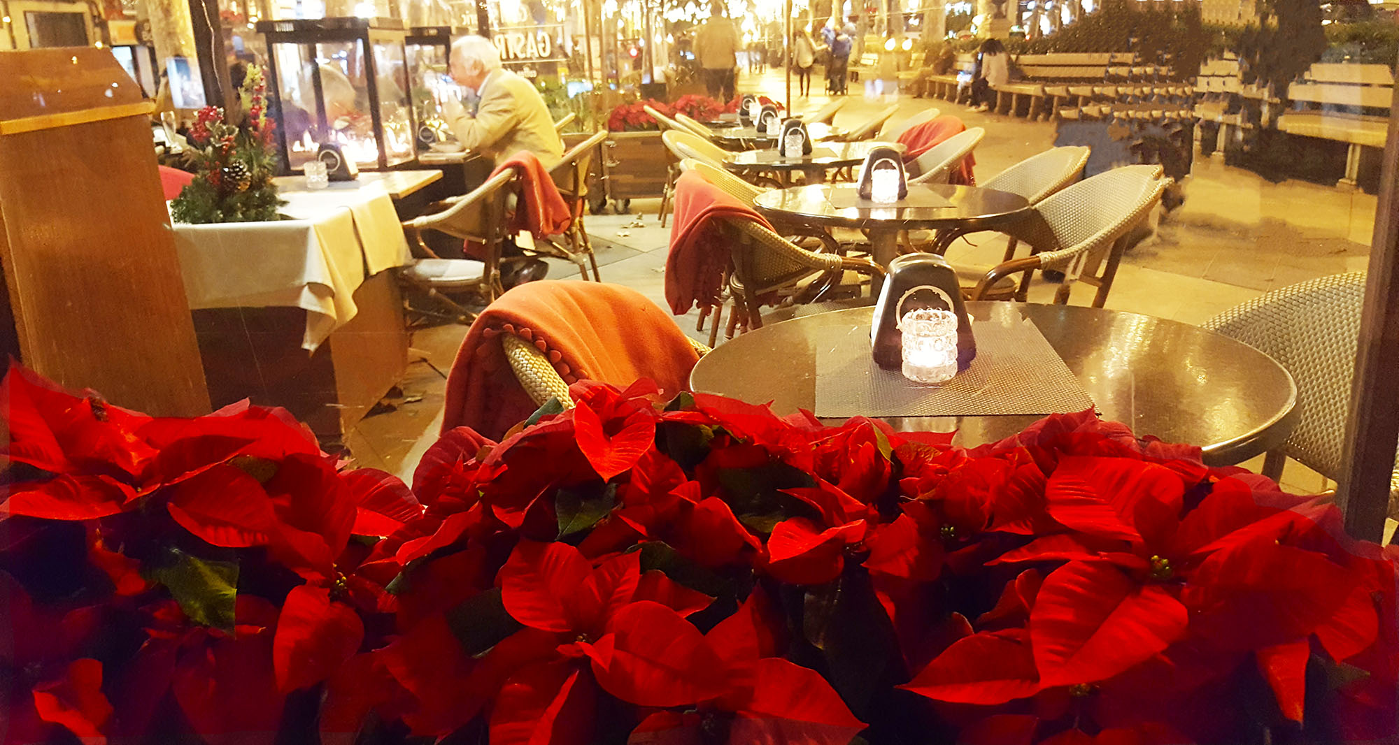 Poinsettia and cafe.jpg