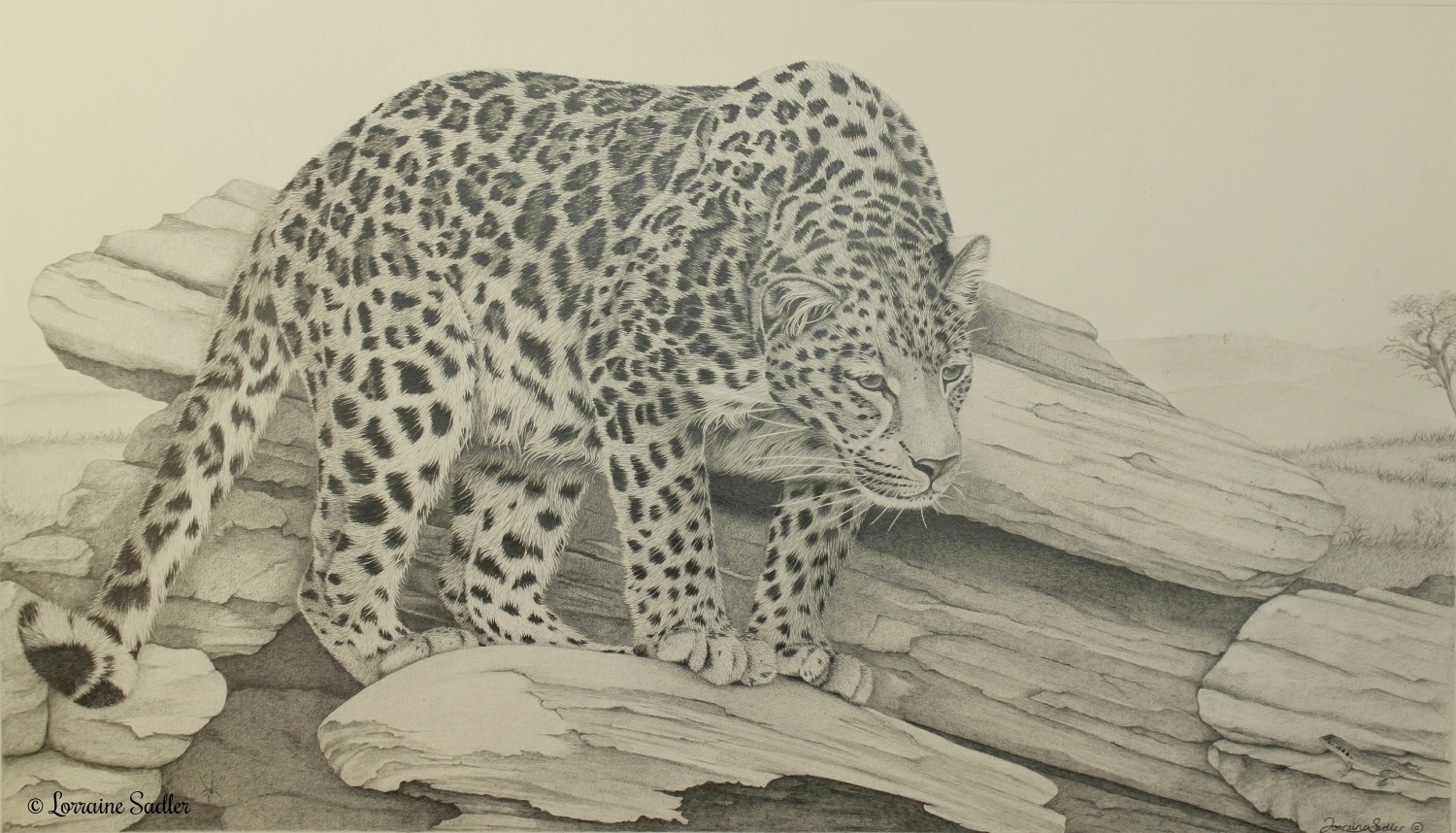 Spotted (21.5 x 12 inches) £1,330