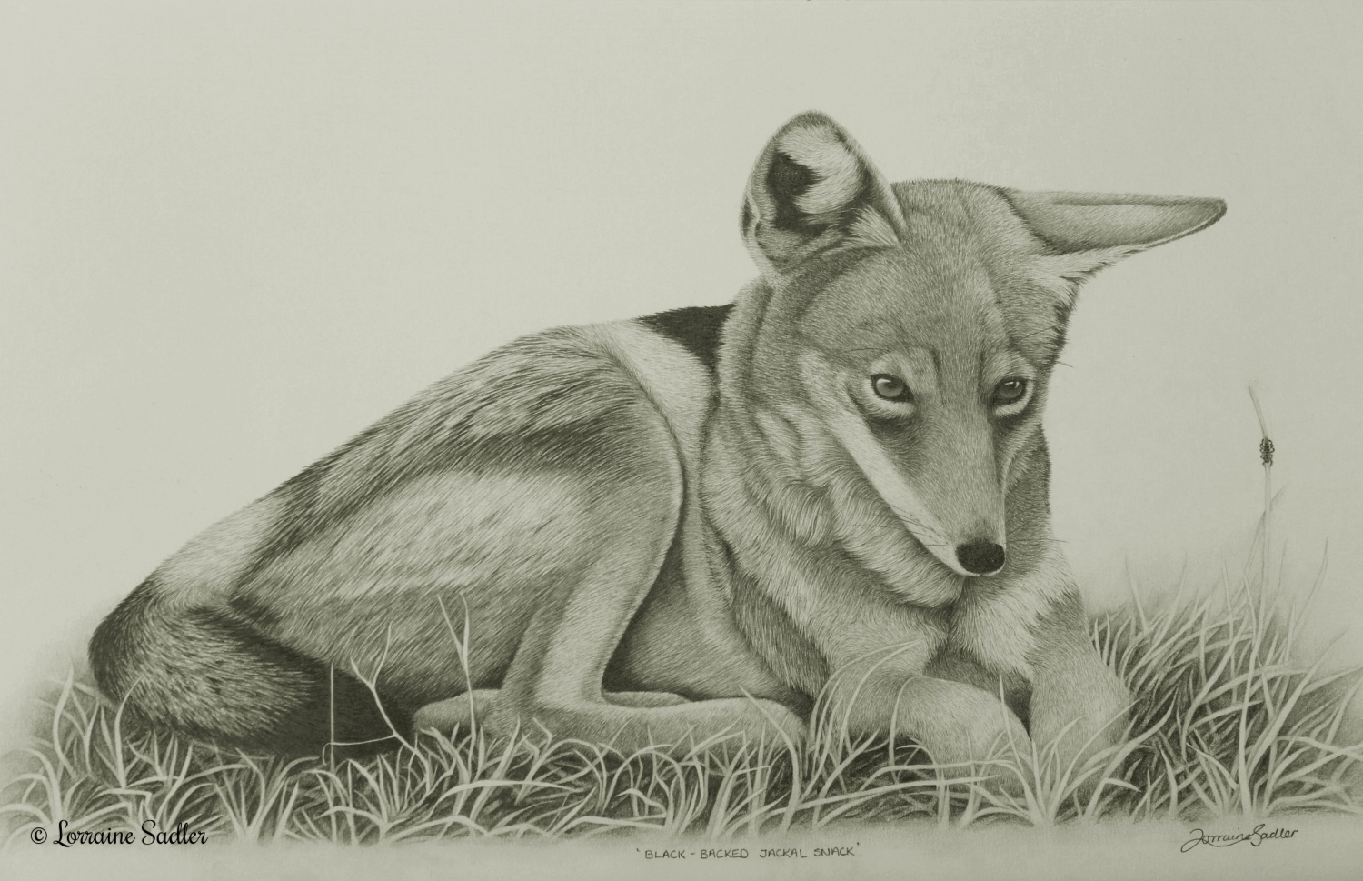 Black Backed Jackal Snack (20 x 10.5inches) £1,200