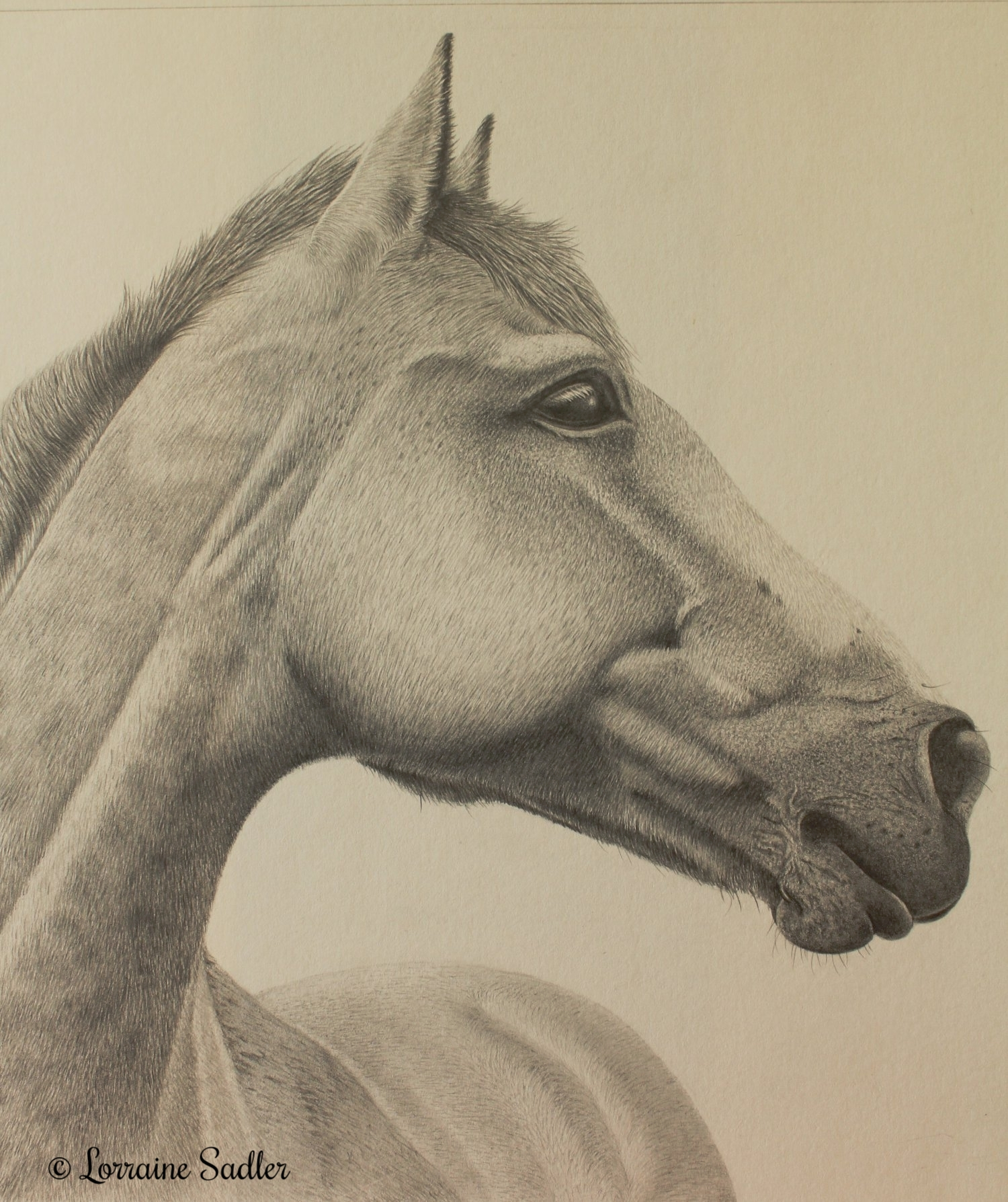Horse Study (8.75 x 9.75 inches) £660