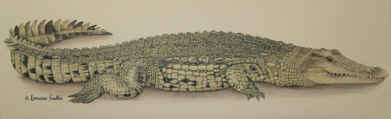 Nile Crocodile (23.5 x 8 inches) £1,200