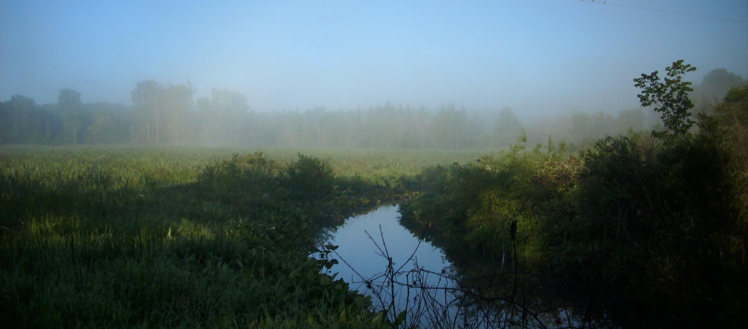 Wetland_HomePg_Pic.jpg