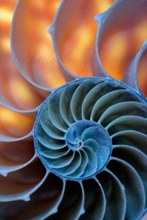 biomimicry.jpg