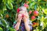 St. Paul's - Apple Picking.jpg