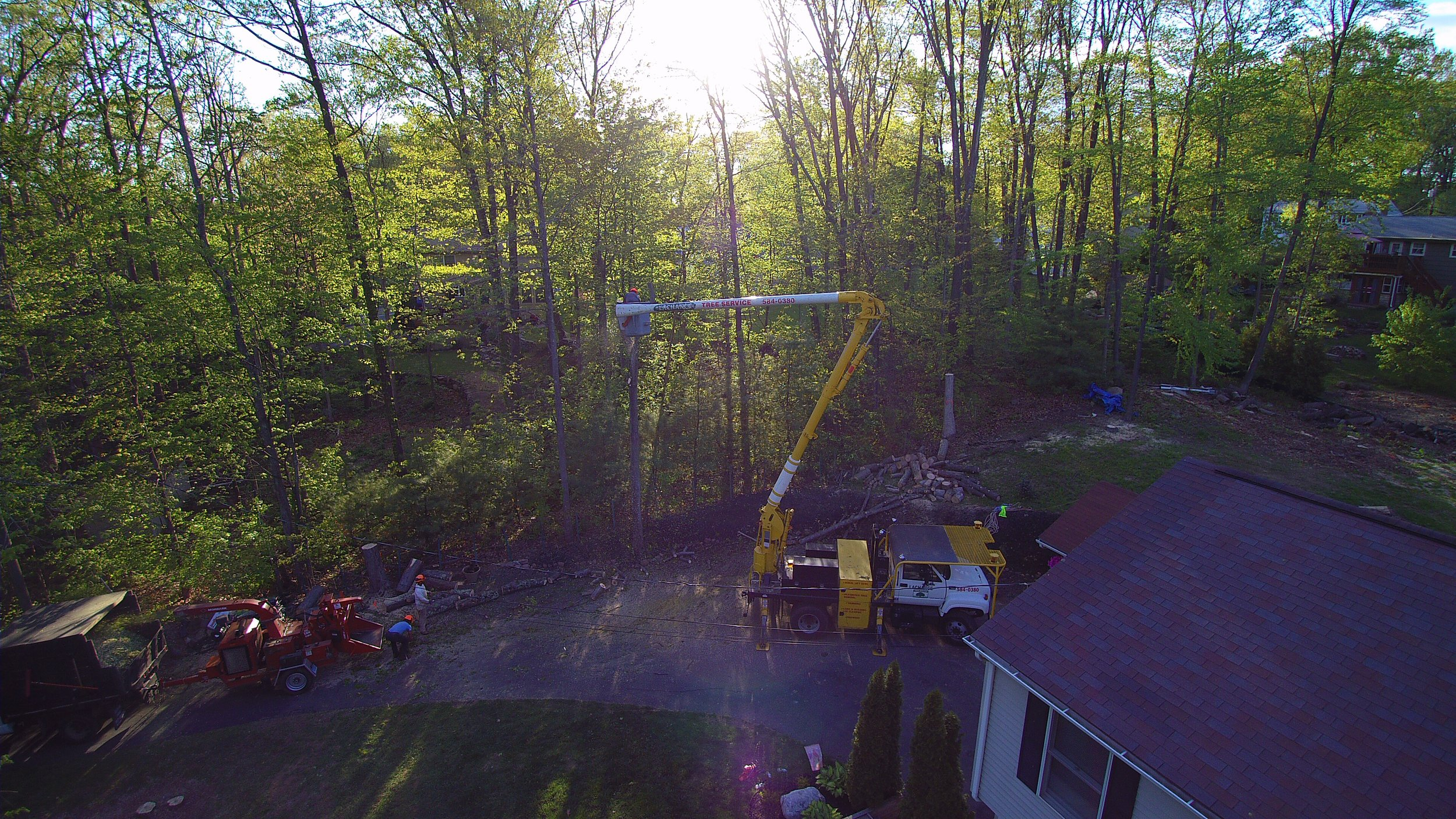 Tree trimming and removal with 65 ft skyworker