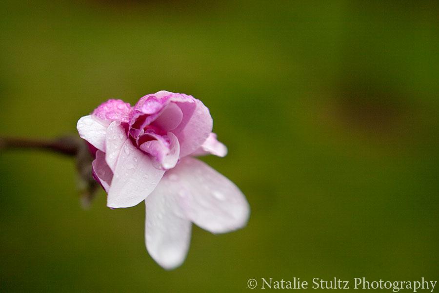 magnolia_09.jpg