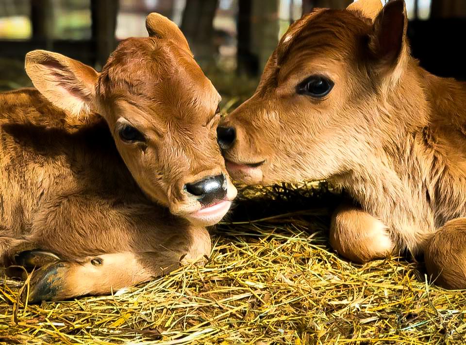 Snider Dairy-2.jpg