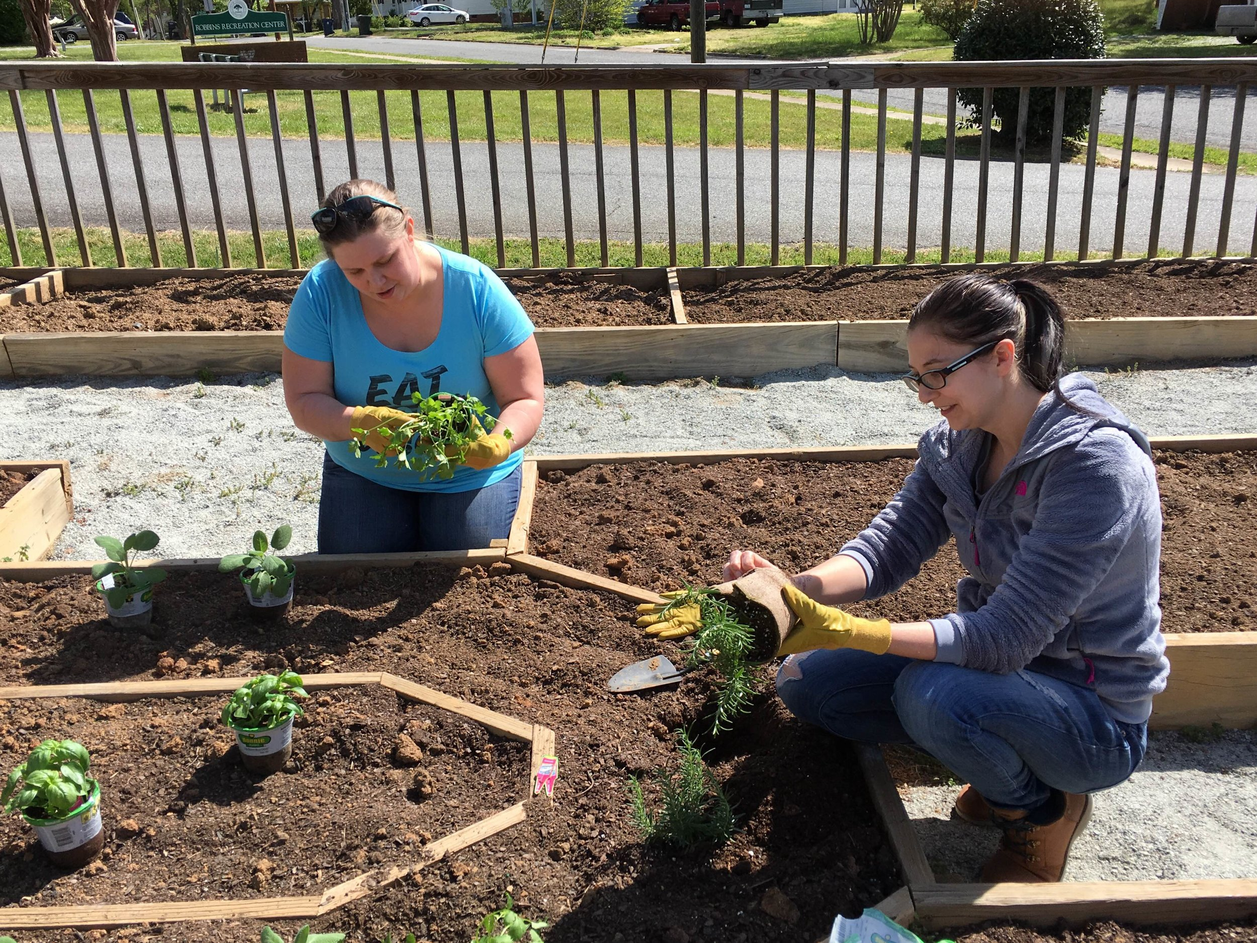 Transplanting in raised beds