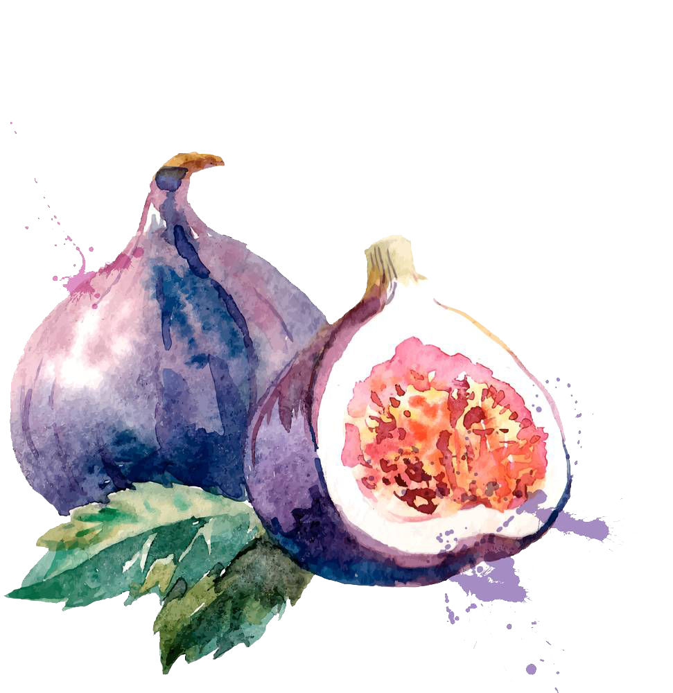 kisspng-common-fig-watercolor-painting-drawing-illustratio-watercolor-without-melon-and-leaves-5a922ddda766f2.8575537915195294376857.png