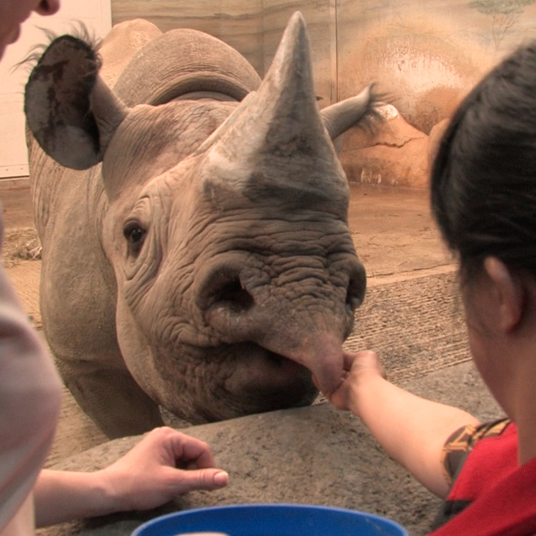 Petting Rhino.jpg