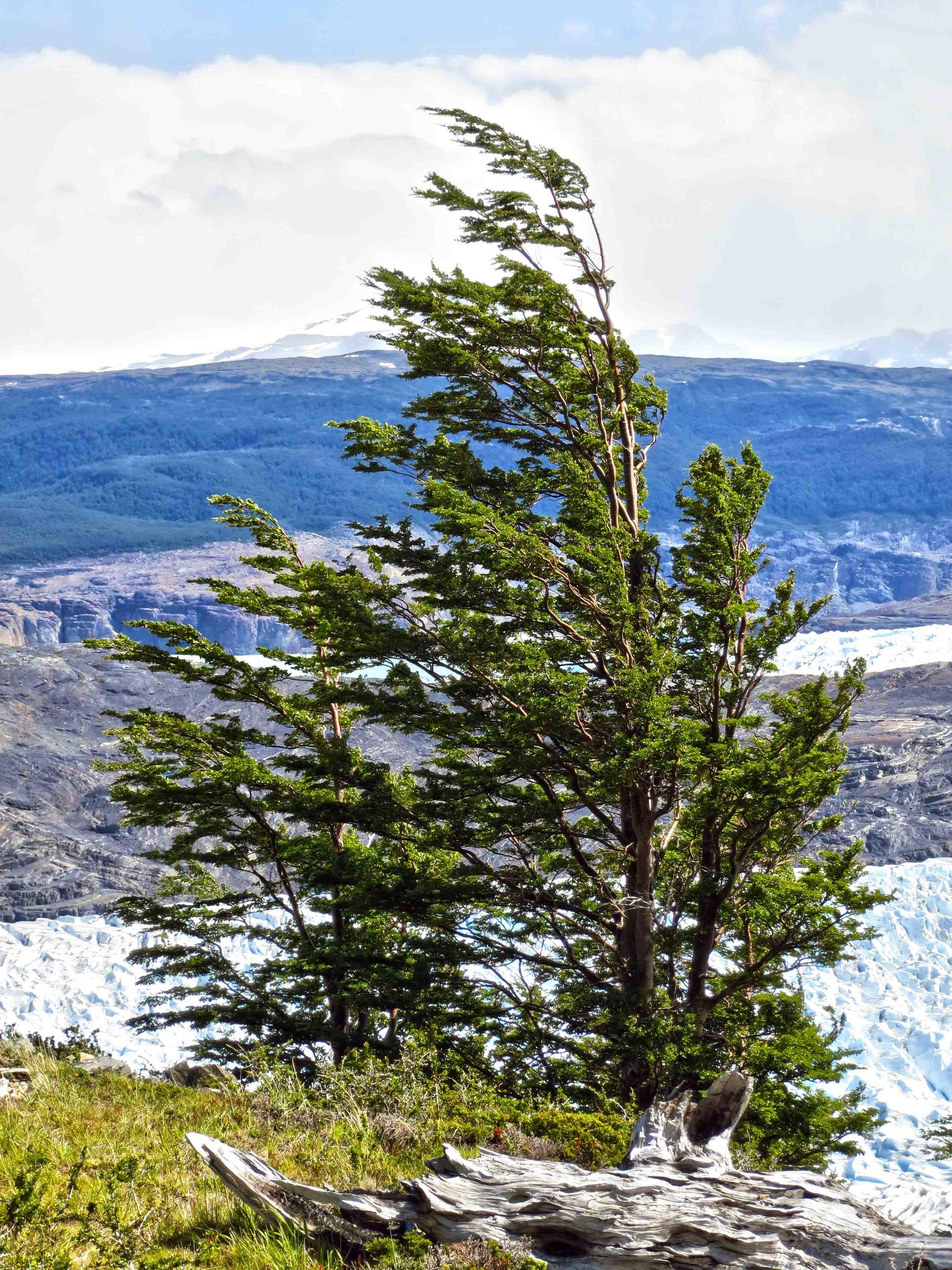 Patagonia WebSized-41.jpg