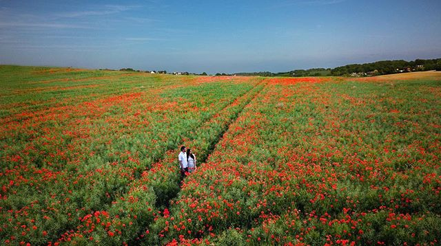 I've been driving around the country and seen patches of poppies around. And wishes I could find a field full of poppies, to take a couple for their pre-wedding shoot. Thanks to Instagram and hashtags, I managed to come across one. ——————————————————————- #photographer #weddingphotographer #poppies #poppy #field #summer #preweddingshoot #bigfatindianwedding #indianwedding #dronephotography #dronestagram #drone #weddingwire #weddingideas #weddingsutra #weddings #femalephotographer #femaleweddingphotographer #asianwedding #asianbridesblog #weddinginspiration