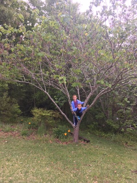 Arbor Day Tree.jpg