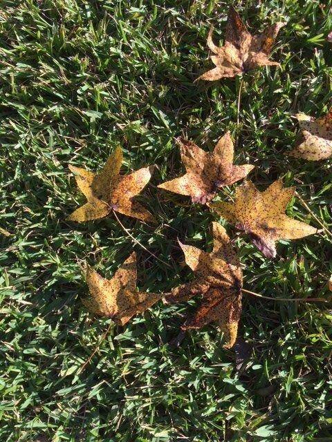 fall 4.jpg