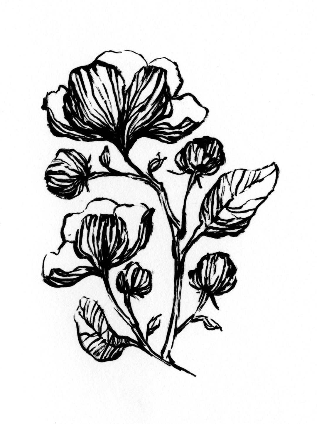 Flower illustration by Laura Dreyer, drawn in ink.