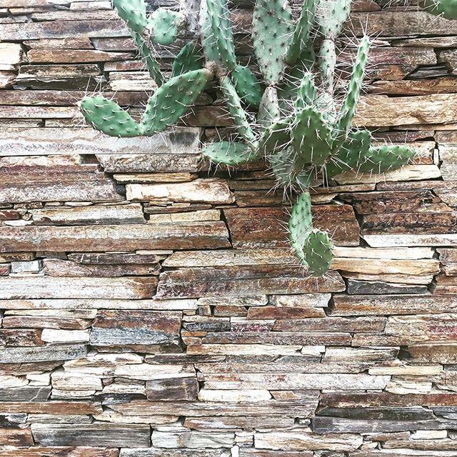Texture on texture.  #materiality  #plantsofinstagram  #cactusamongus