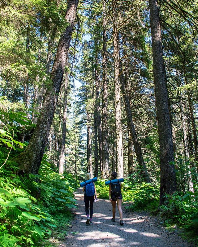 Dreaming about getting lost in the forest? Mount marathon is the place to be.