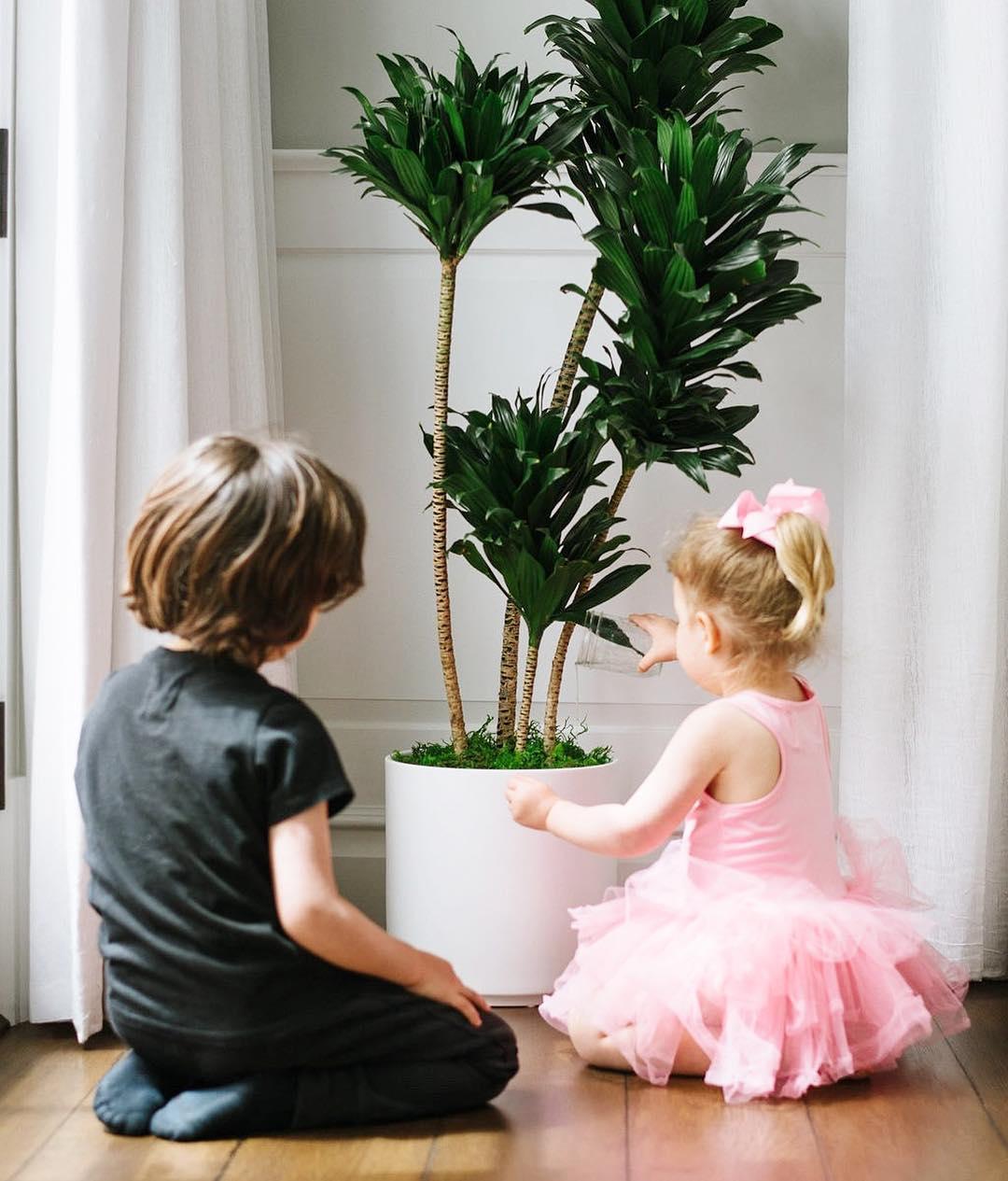 dr mom plants.jpg