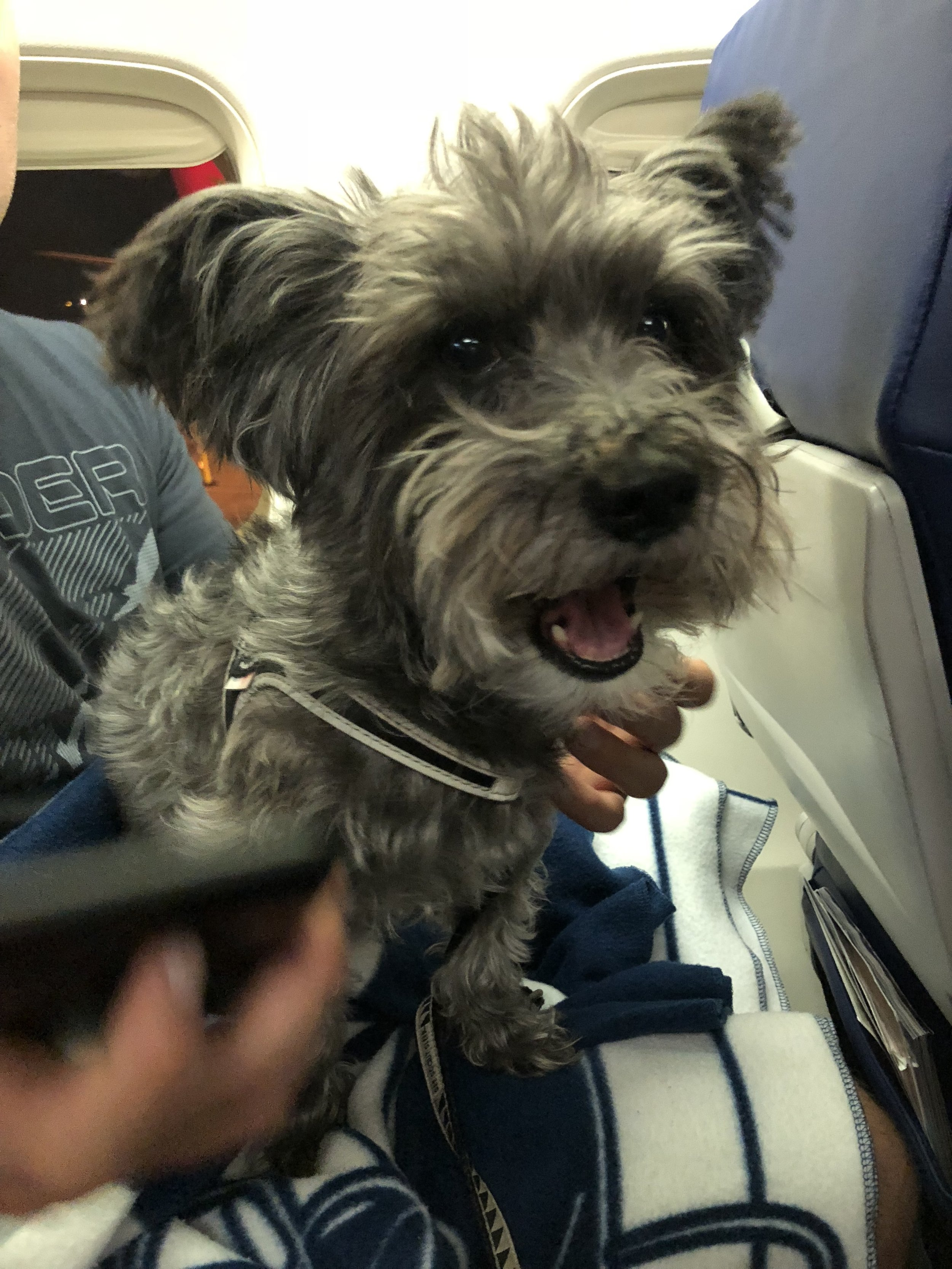 Flying Southwest with an ESA Dog