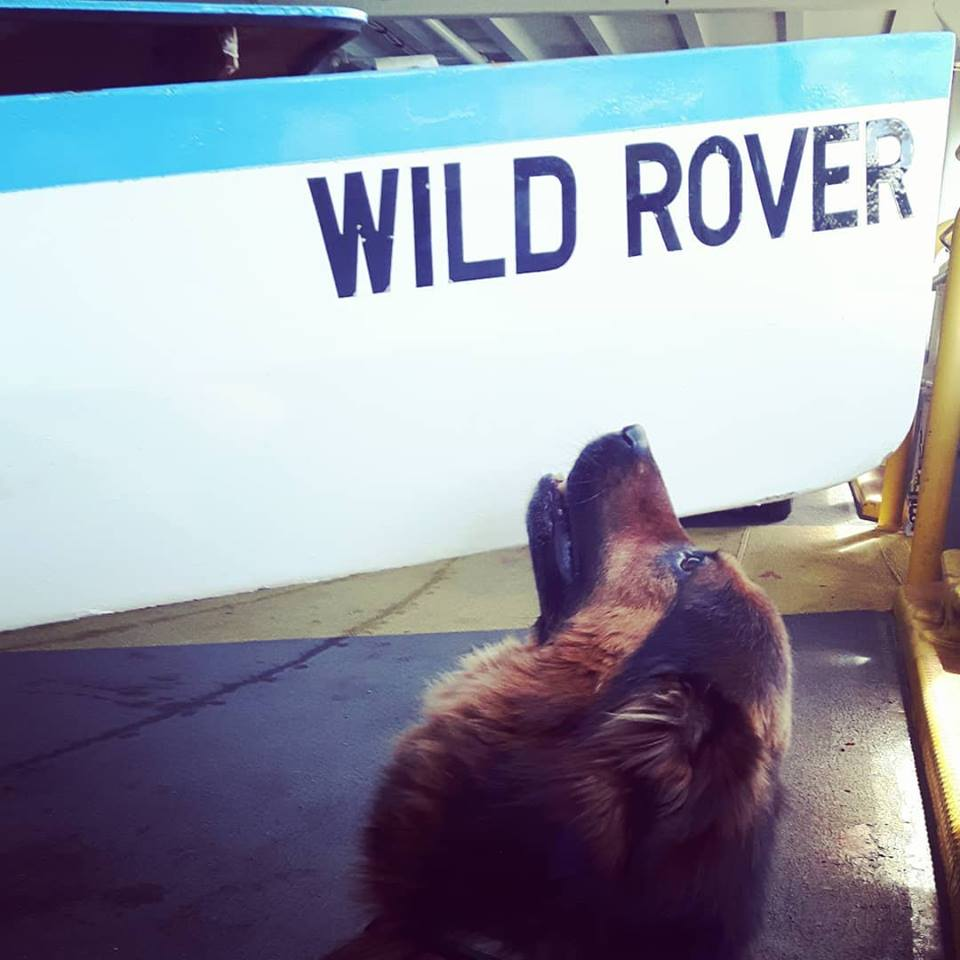 The Wild Rover and rover. (Photo by Genevieve Gay)