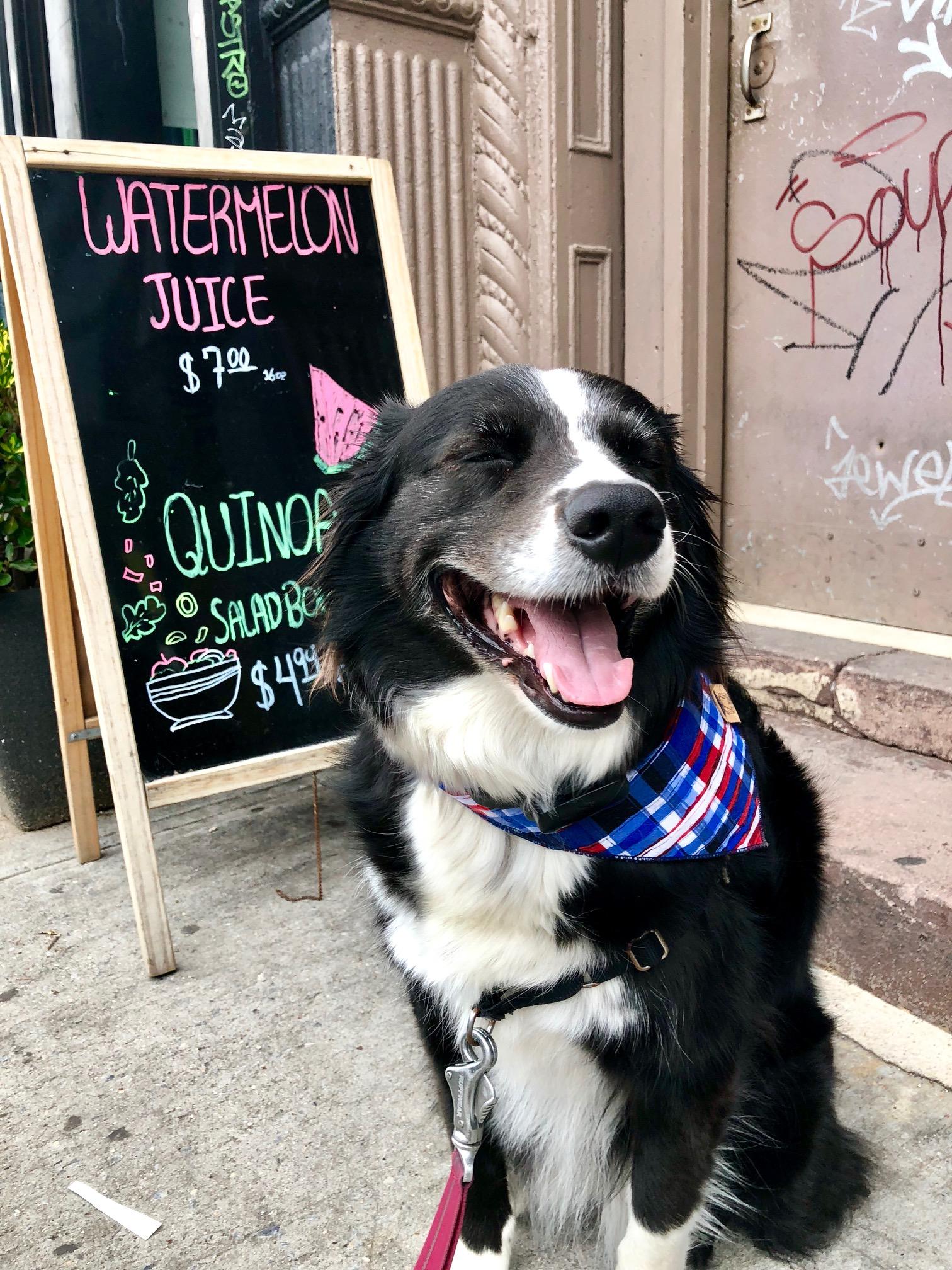 fourth-of-july-dog-bandana.jpg