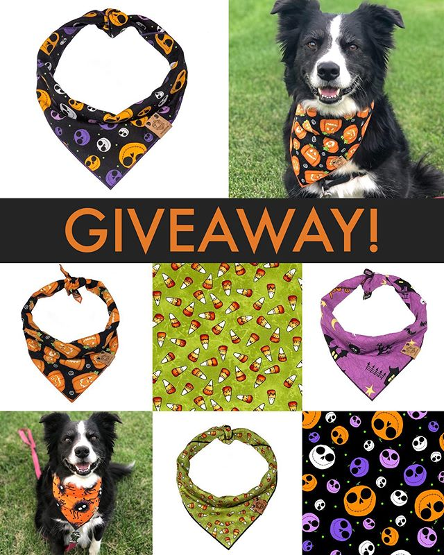 🎃GIVEAWAY🎃 We are hosting a Halloween Giveaway! You'll win one spooky bandana (of your size and choice) just by tagging some friends. Rules below! 🎃 1) Each tag is an entry. Enter as many times as you'd like! 2) Tag your friends on separate lines to ensure they are counted.  3) Contest will run from 10/1 to 10/5. We will draw the winner on 10/6 and ship with 2-day Prime! 4) You must be following us.  5) Shipping to US addresses, only.  6) We can only accept tags on Instagram. This contest is in no way associated or affiliated with Instagram.