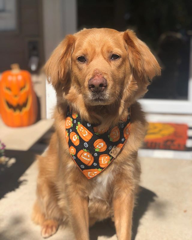 🎃SASSY PUMPKINS🎃 Apparently we get Buster's blue steel look in his Spicy Pumpkins bandana 🤣🥶
