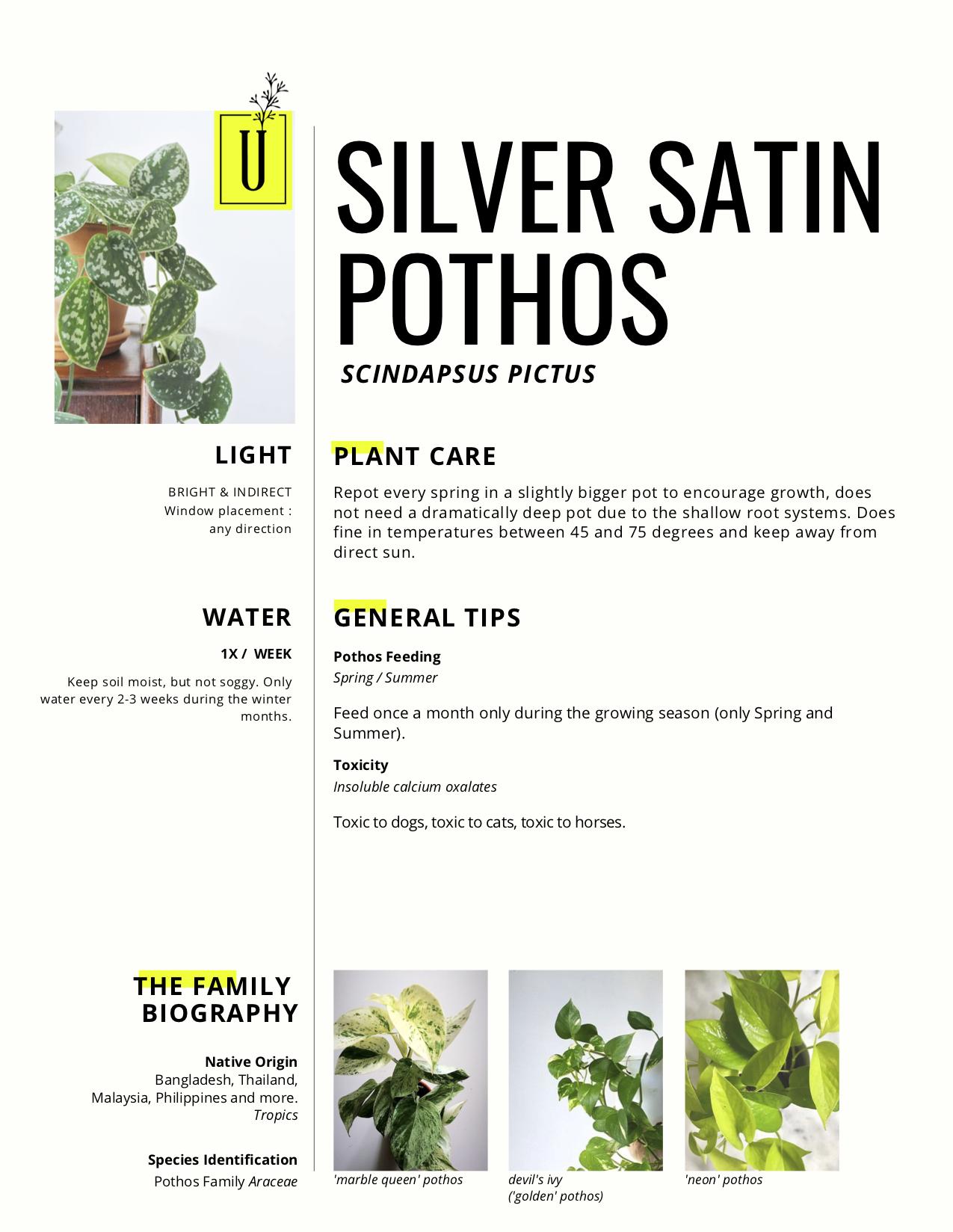 silver satin.jpg